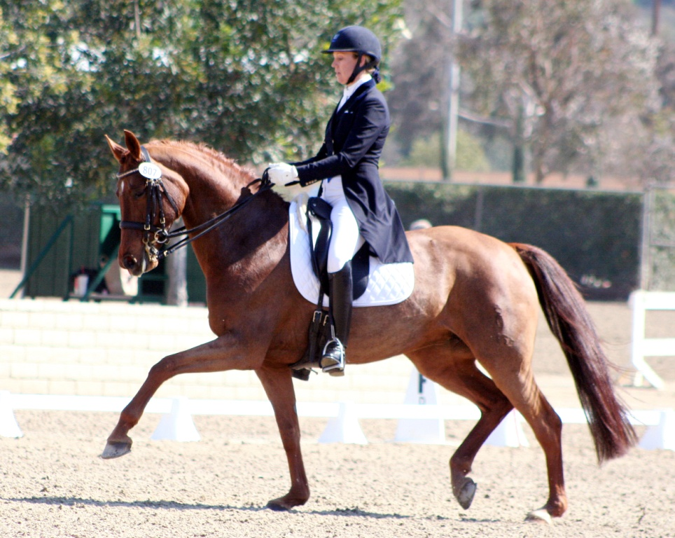 Oldenburg horses for sale in california for Horse property for rent in southern california