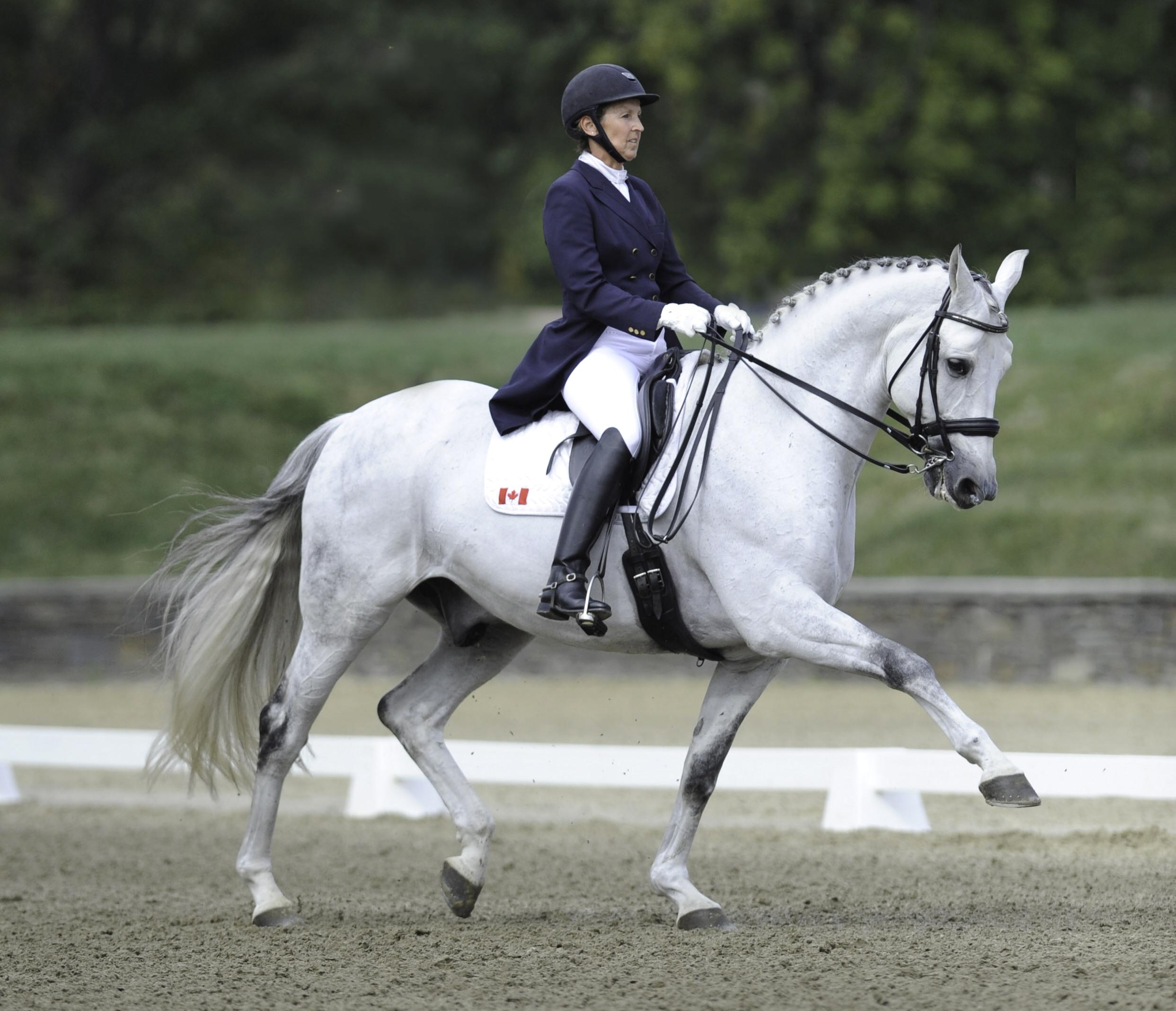 Global Views Horse: The Oldenburg Horse Breeders' Society