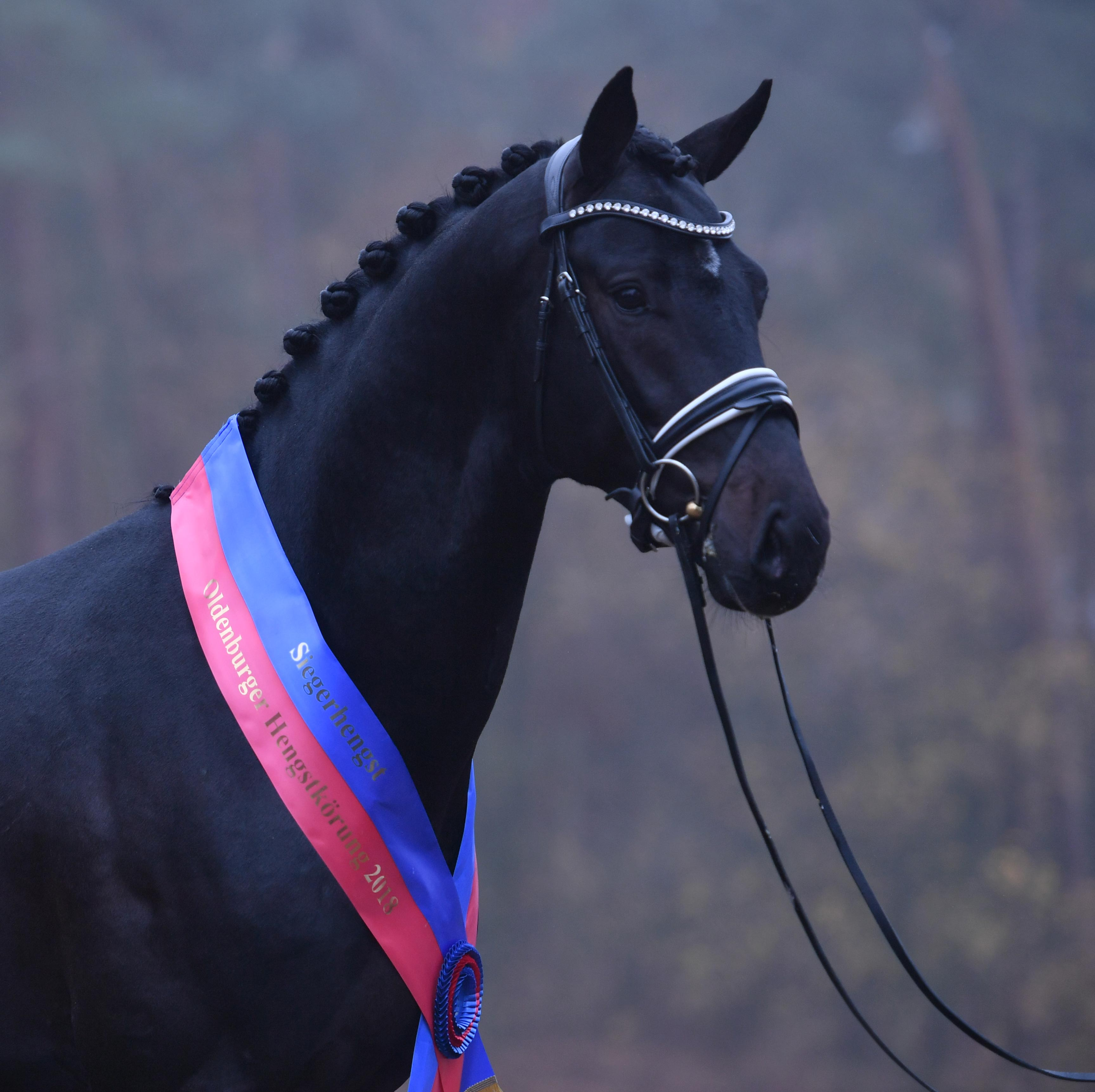 The Oldenburg Horse Breeders Society Oh News News